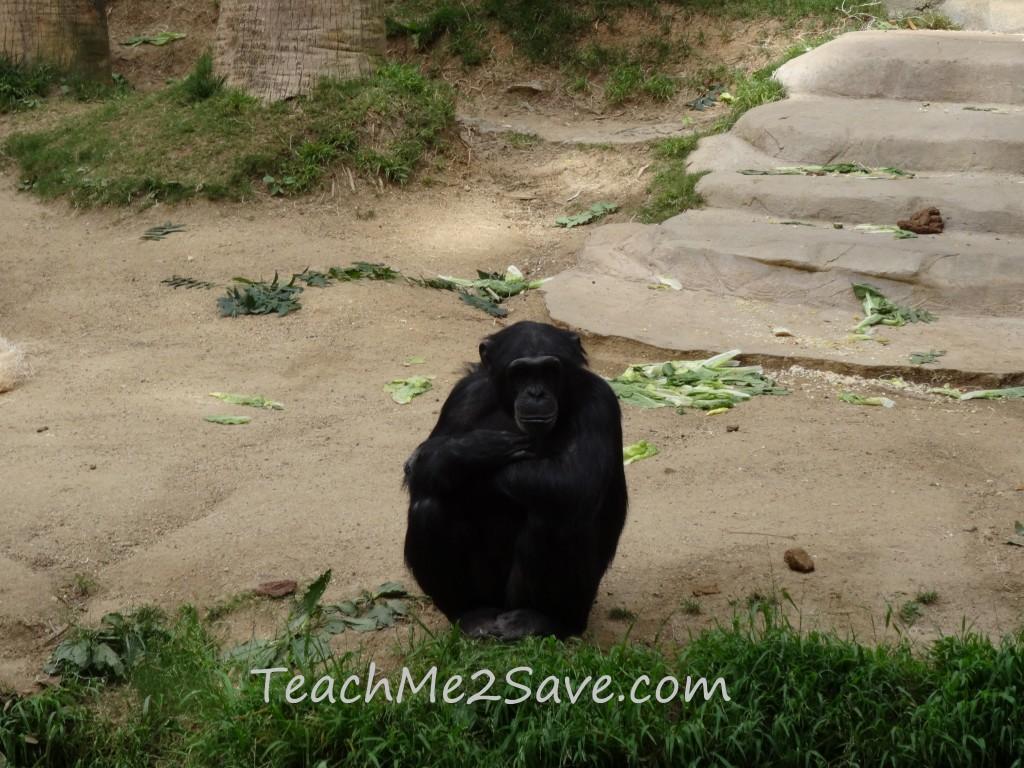 LA Zoo Monkey