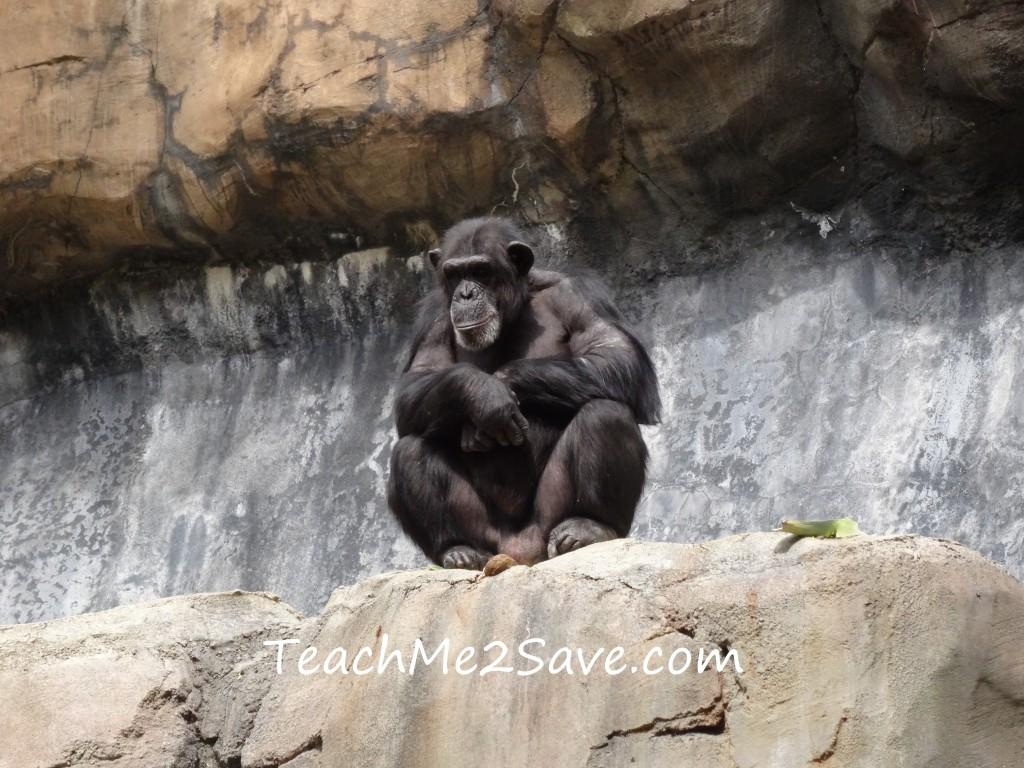 LA Zoo Monkey 2