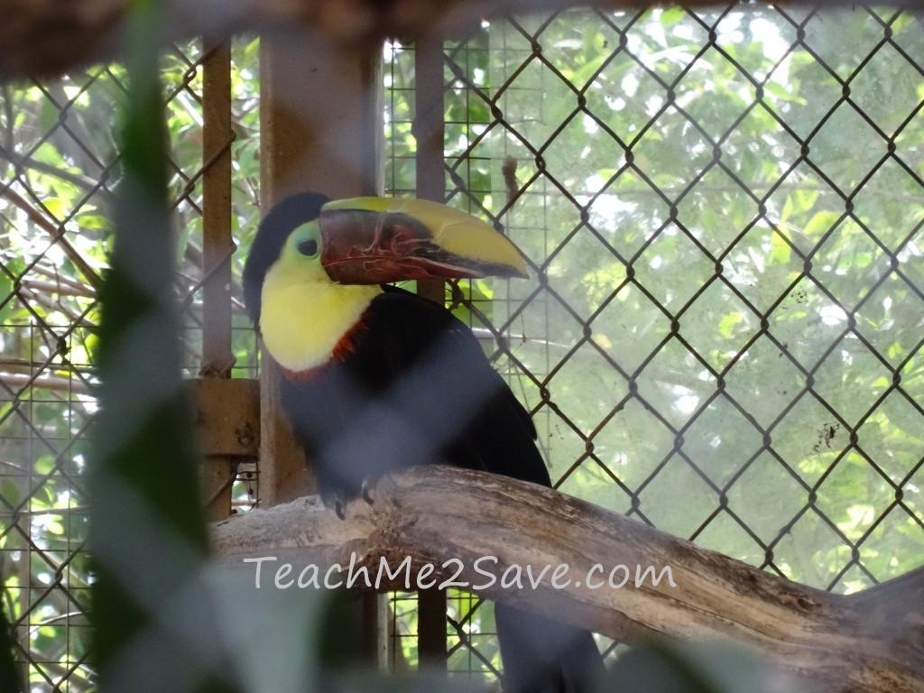 LA Zoo Parrot