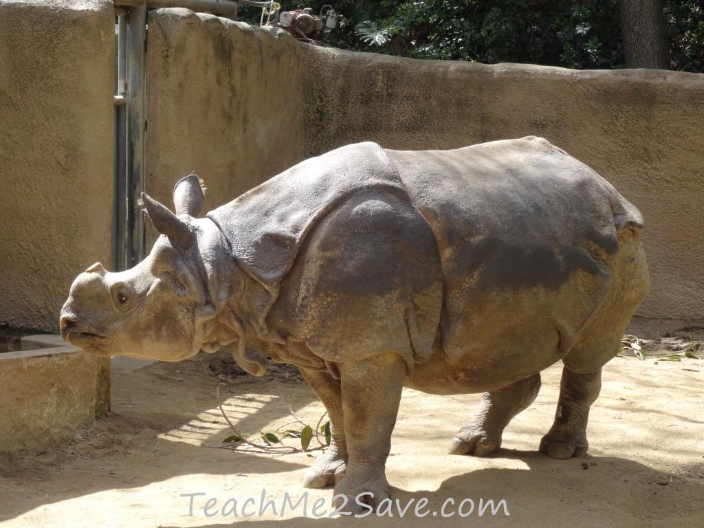 LA Zoo Rhino