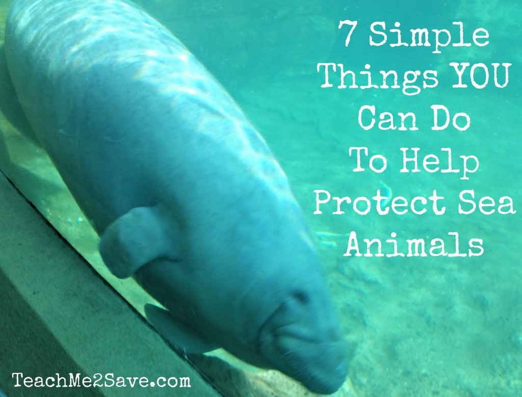 7 Simple Things YOU Can Do To Help Protect Sea Animals - TM2S