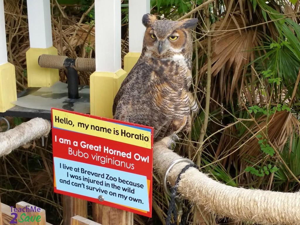 Great Horned Owl - TM2S