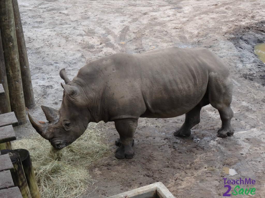 Rhino - TM2S