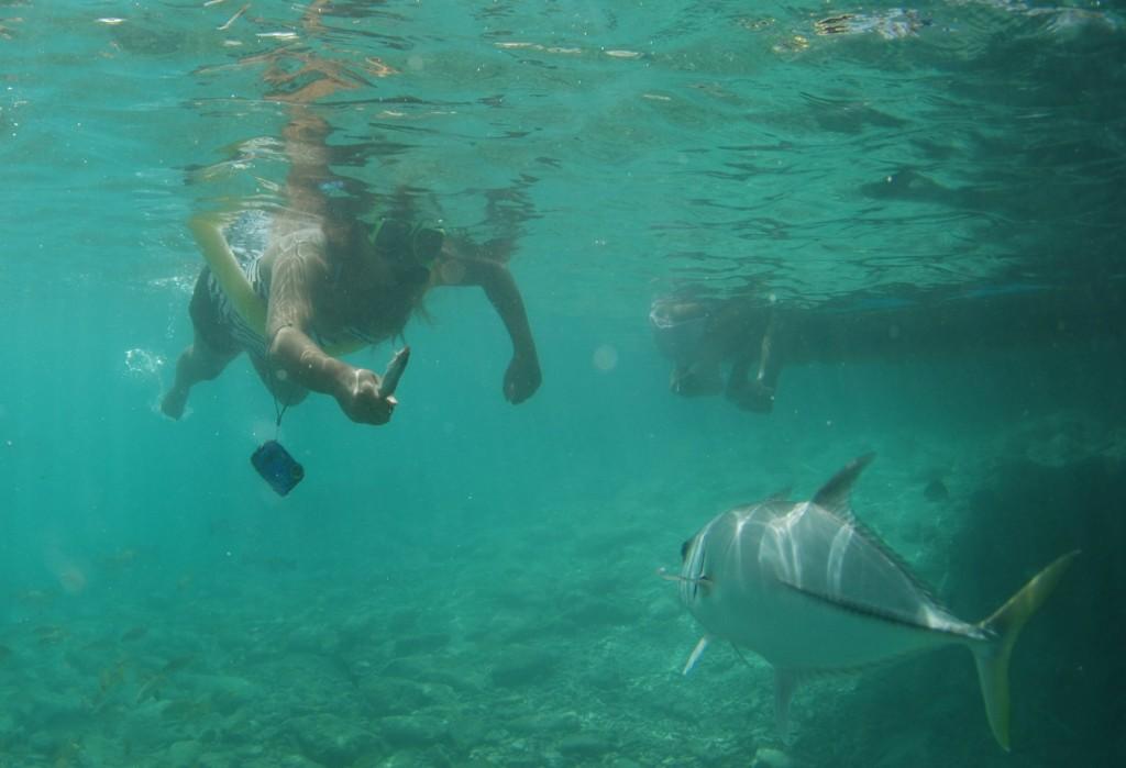 Curaçao Sea Aquarium - Feeding Fish