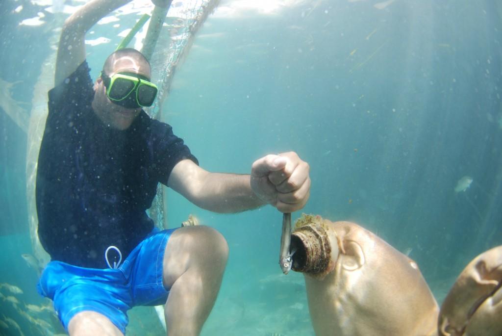 Curaçao Sea Aquarium - Feeding Sharks 2