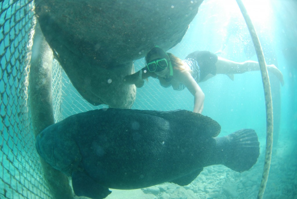 Curaçao Sea Aquarium - grouper Herbie