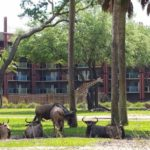 5 Things To Check Out Disney's Animal Kingdom Lodge