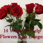 14 Ways To Help Flowers Last Longer