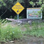 Everglades Alligator Farm Fun
