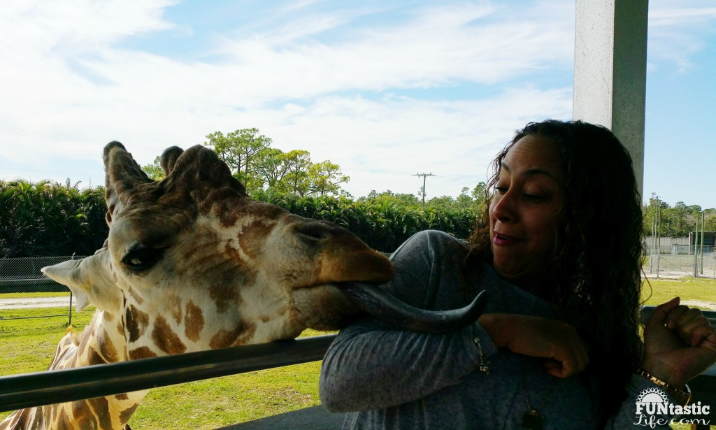 Giraffe licking Leanette Fernandez at Lion Country Safari