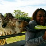 Enjoy Numerous Animal Encounters at Lion Country Safari
