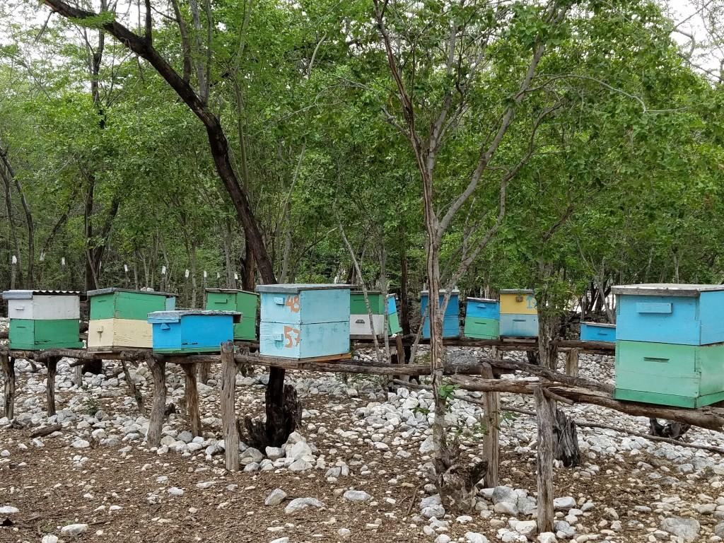 World Vision Bee Hives