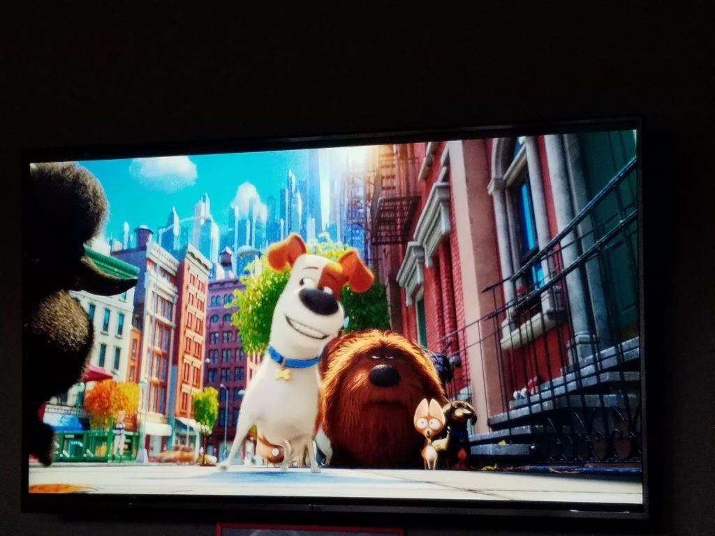 the-secret-life-of-pets-on-dvd-2