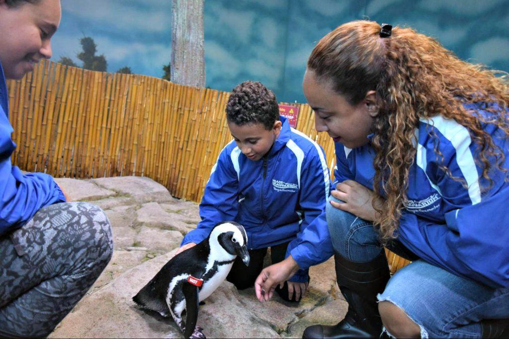 Miami Seaquarium penguin interaction