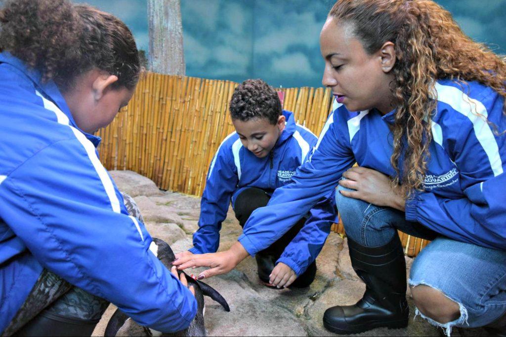 Miami Seaquarium penguin interaction 2