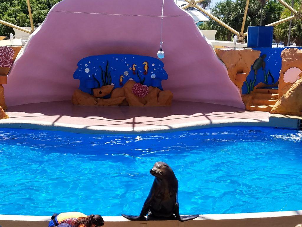 Seal show at Miami Seaquarium