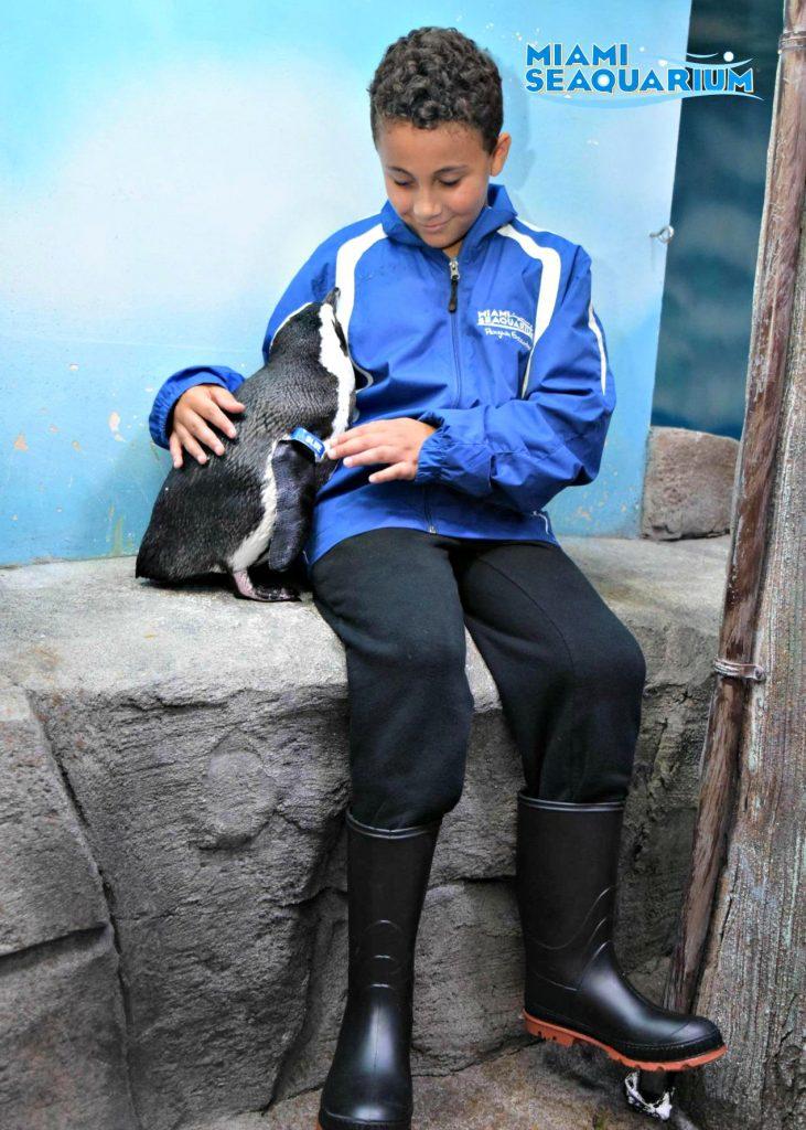 son touching a penguin at Miami Seaquarium R