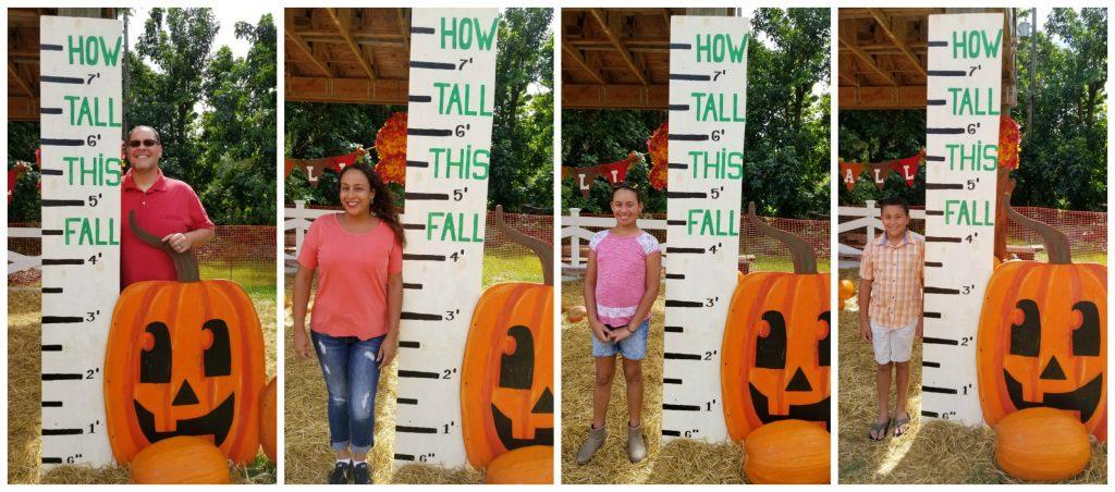 Height Chart at Pumpkin Patch 2017