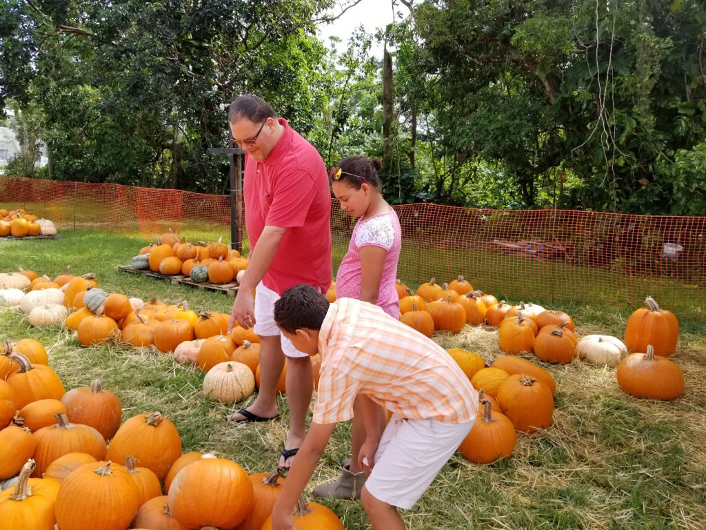 Looking for pumpkins at Pumpkin Patch 2017