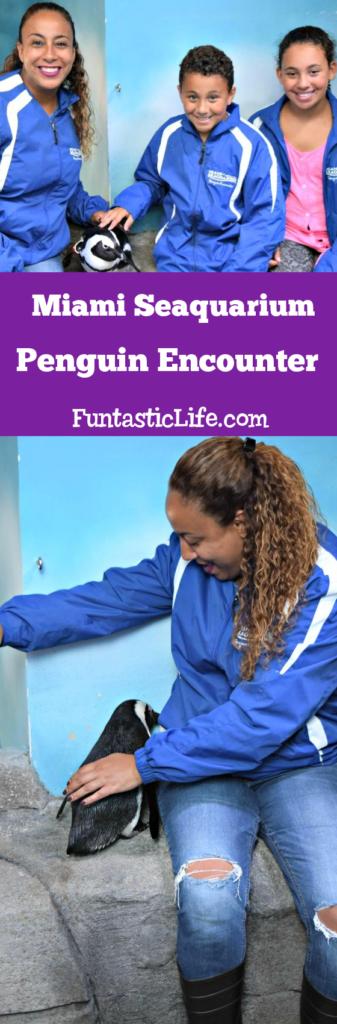Miami Seaquarium Penguin Encounter