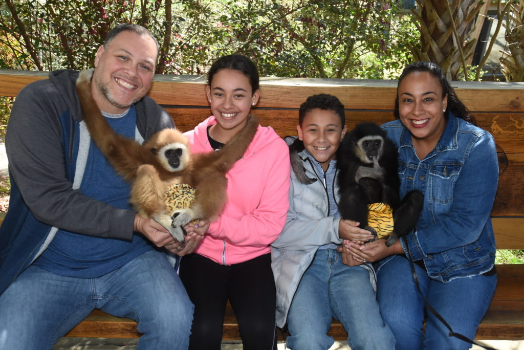 family with gibbon monkeys