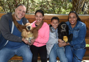 family with gibbon monkeys