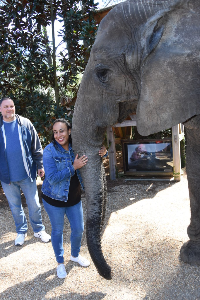 woman hugging elephant trunk