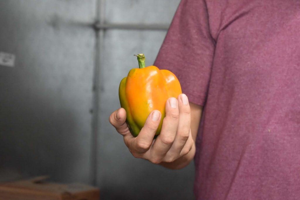 man holding a pepper