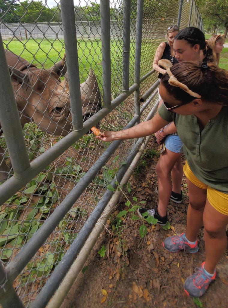 lady feeding the rhino