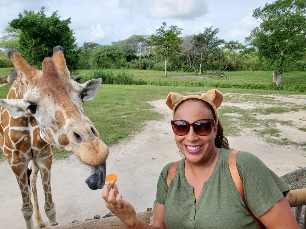 Lady feeding a giraffe