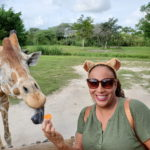 The Lion King Inspired Adventures at Zoo Miami