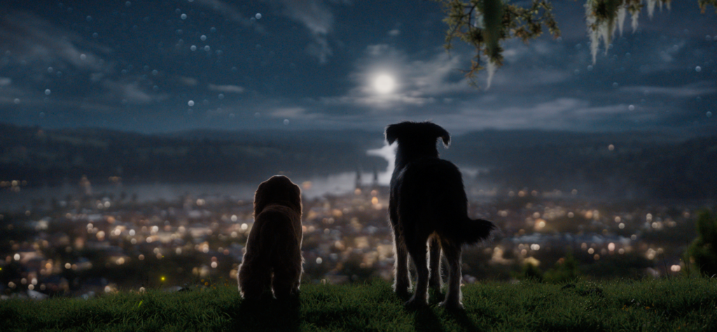 2 dogs sitting on a hill at night