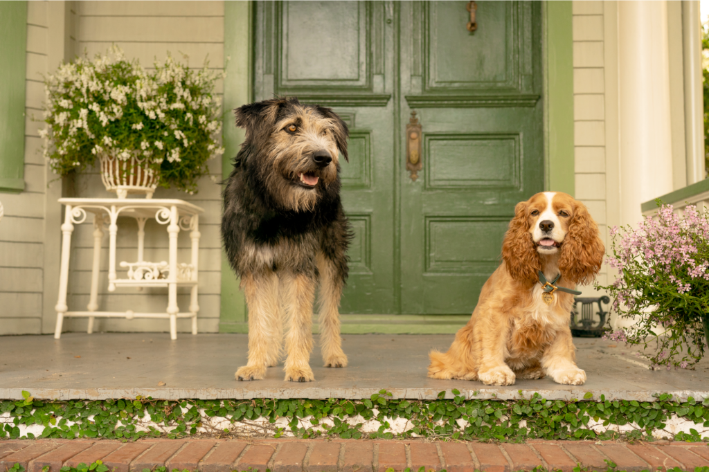 Lady and the Tramp in front of a green door