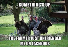 Turkeys talking